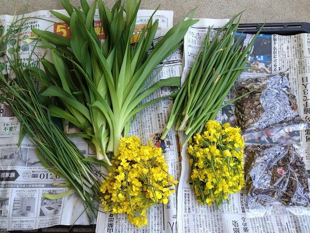 春の野菜セット