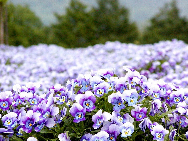 ビヨンドに花を植えよう!