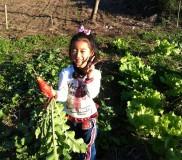 収穫の楽しみ♪