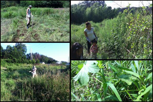 自然農法が可能な市民農園(貸し農園)@山梨 | 自然農園ビヨンド