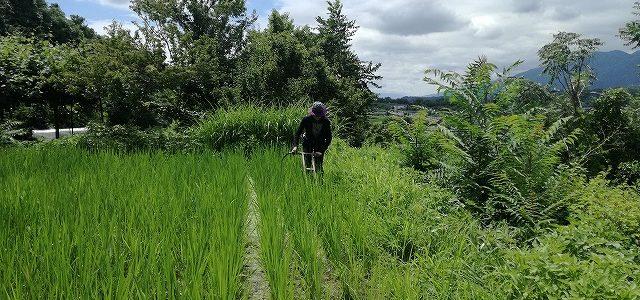 生きる力を学びたい! ~ボランティアで米作り、古民家改修~