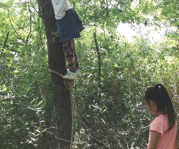 ブリ縄で木登り+枝打ち