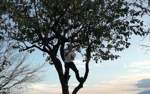 自然の恵み カキ ~結局木登り!~