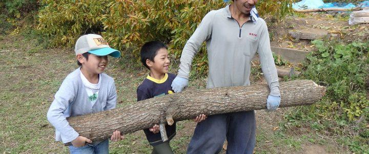 茅葺きキャンプの様子 vol.01  ~倒木処理から木の伐採~