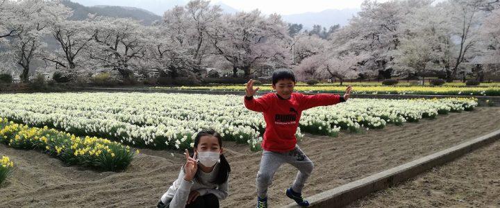 春! ~桜や山菜~