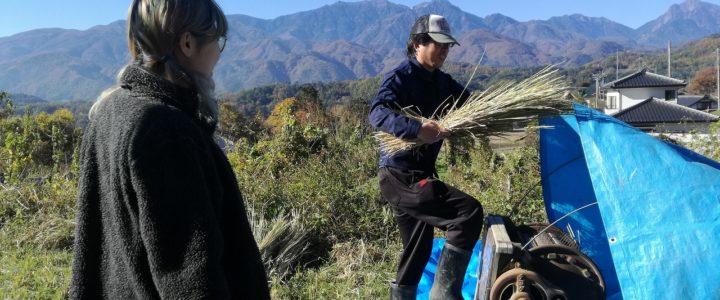お米のある暮らし ~稲刈り、脱穀、唐箕がけ~