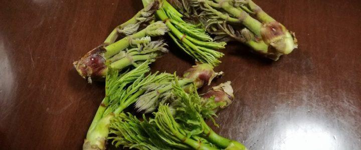 自然の恵み 山菜!!