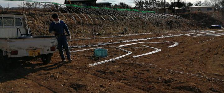 トマトを頂いた農園に手助けに